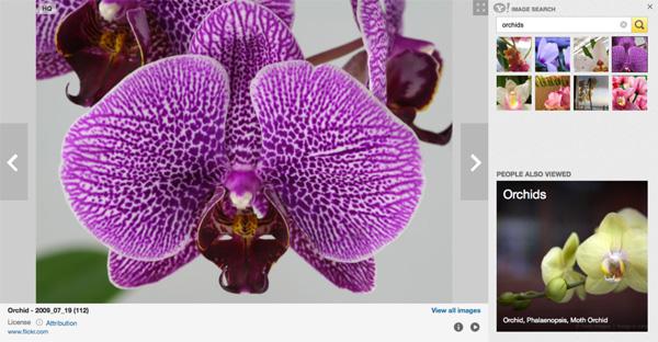 Yahoo integra Flickr fotos en la búsqueda de imágenes
