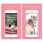 Telekitty, una app para comprender a tu gato