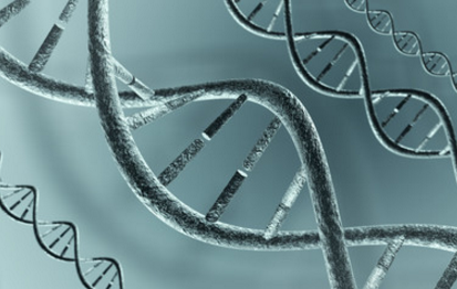 Mapean un catálogo de mutaciones genéticas de los humanos