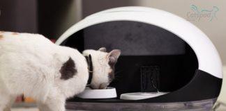 Un-comedero-inteligente-para-gatos-y-perros