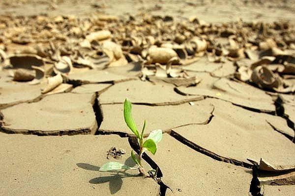 calentamiento-global-amena-biodiversidad-marina