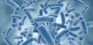 estudio-demuestra-10-bacterias-sensibles-medicamentos-y-enfermedades