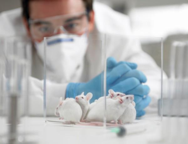 ratones-laboratorio-adn